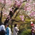 写真: 御苑の春