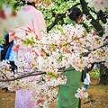 Photos: 華ふたつ