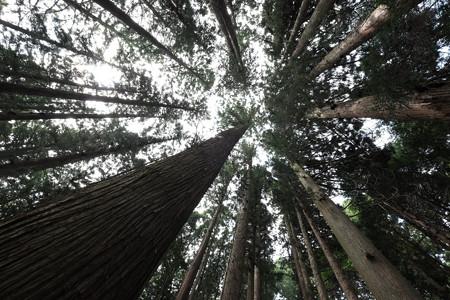 05神聖なる木