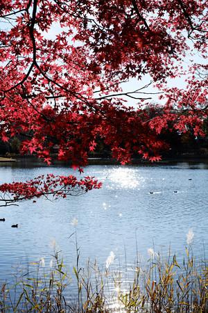 昭和記念公園-3756_池