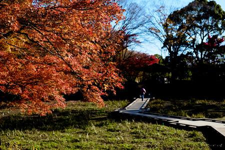 昭和記念公園-3759_木道
