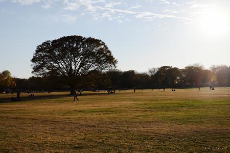 昭和記念公園-3815
