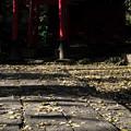 聖天山_鳥居-3956