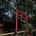 お鷹の道_稲荷神社-01515