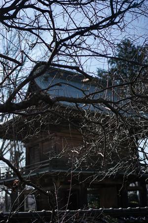 武蔵国分寺_楼門-01545