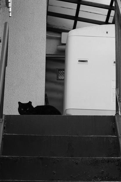 acros_黒猫-6601