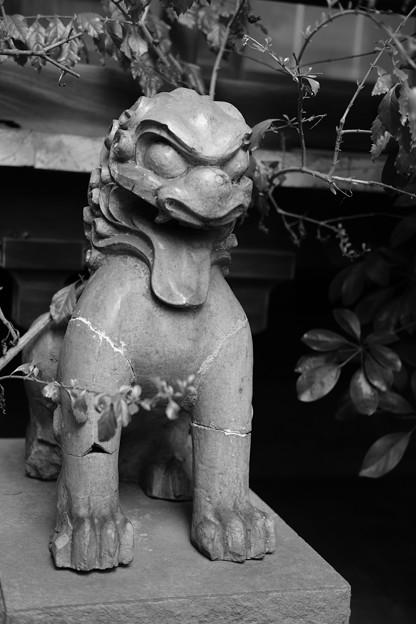 acros_狛犬-6620