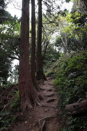 X70_八王子城_23_本丸への道-0598
