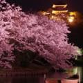静寂な三溪園の夜 夜桜と三重塔・・20140402