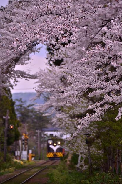 Photos: 桜の中あるストーブ列車・・20140501