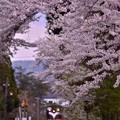 桜の中あるストーブ列車・・20140501