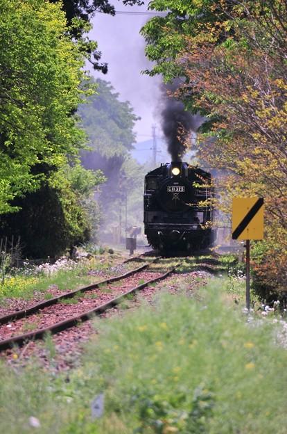遠くから汽笛がなり力強く煙を吐く真岡鐵道SLC11325?・・20140511