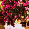 Photos: 犬の散歩がてらバラと・・20140518
