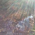 雨上がりの紅葉。。木漏れ日。。昭和記念公園 11月15日 撮ってだし