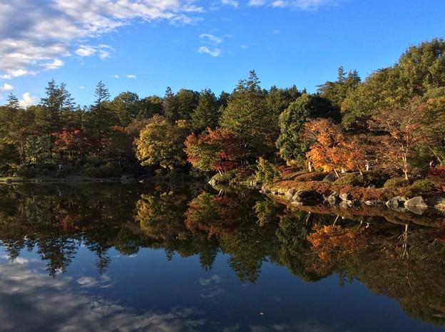 雨上がりの日本庭園。。昭和記念公園 11月15日 撮ってだし