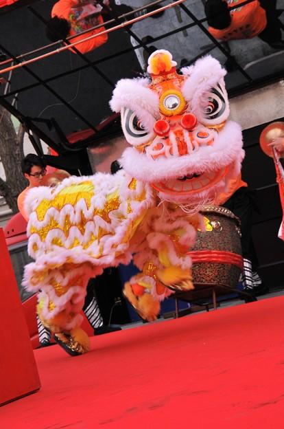 愛嬌振りまく中国獅子舞の舞・・20150221