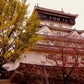 Photos: イチョウの木と小倉城。。20151121