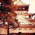 Photos: もう紅葉も終わりの小倉城周辺。。20151121