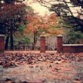Photos: 昔の歴史を感じて。。秋から冬へ。。枯葉落ちる小倉城周辺20151121