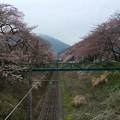 撮って出し。。神奈川県山北の桜。。4月2日