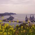 春の菜の花と横須賀港。。海上自衛隊艦船 20160320