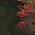 Photos: 紅葉一点