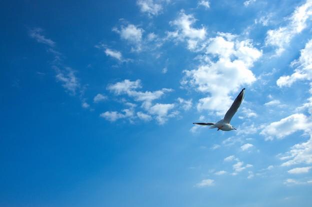 写真: 大空へ