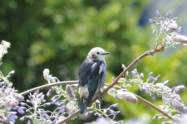 普段なにげなく見ている野鳥ですが、じっくり観察することで、身近で豊かな自然を感じることができます。主に関東地方の市街地や、関東地方の郊外などで観察することができる野鳥をご紹介いたします。のサムネイル画像