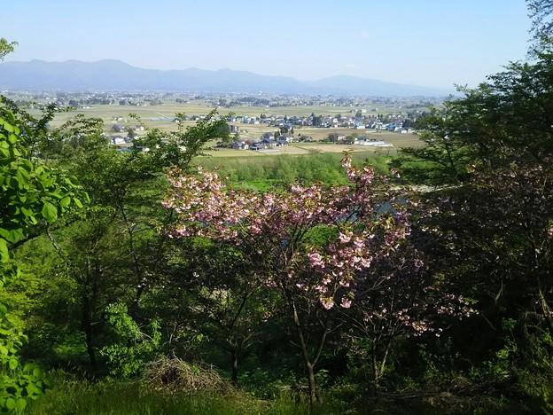 八重桜・仙北平野&奥羽山脈