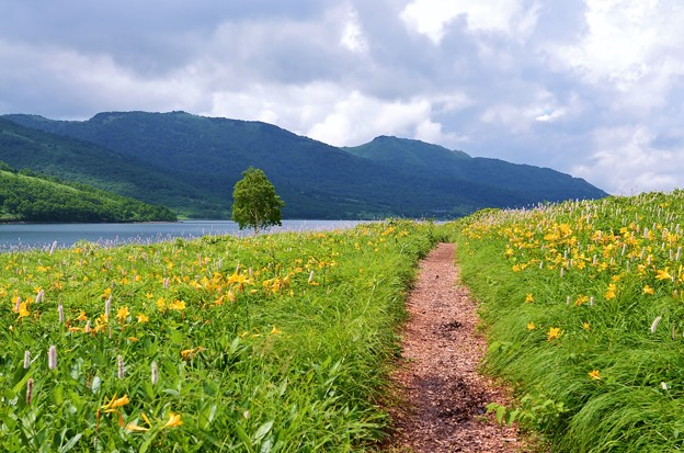 野反湖 ノゾリキスゲの咲くころ(19)