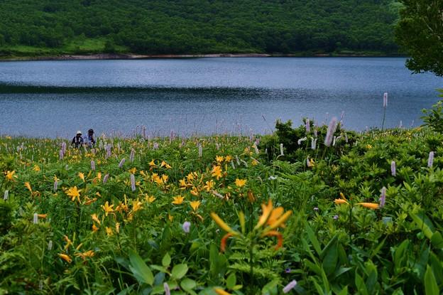 野反湖 ノゾリキスゲの咲くころ(22)
