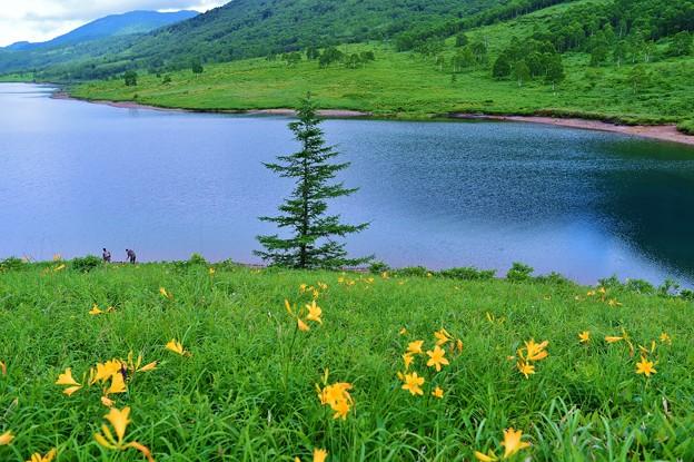 野反湖 ノゾリキスゲの咲くころ(24)