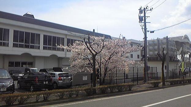 小学校入学式。珍しく桜が間に合った。まだ五分咲きぐらいだけど、入...