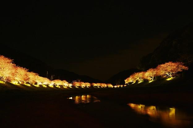 夜桜~河面