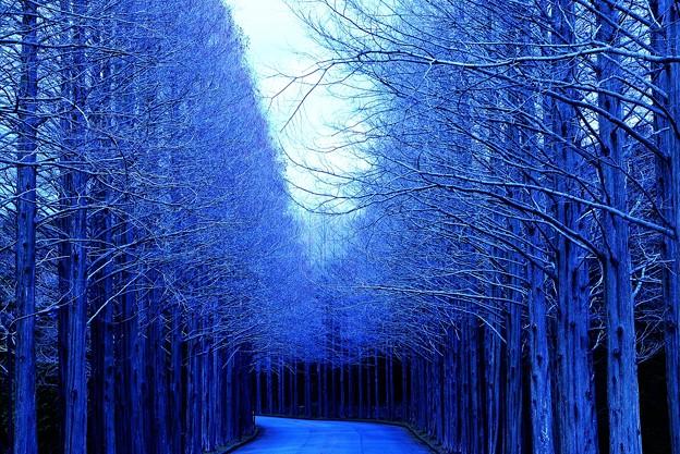 蒼い散歩径