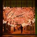 夜桜 ~終章~