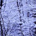 Photos: 綿雪