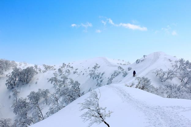 写真: 白い散歩道