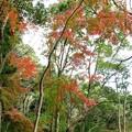Photos: 太子の森