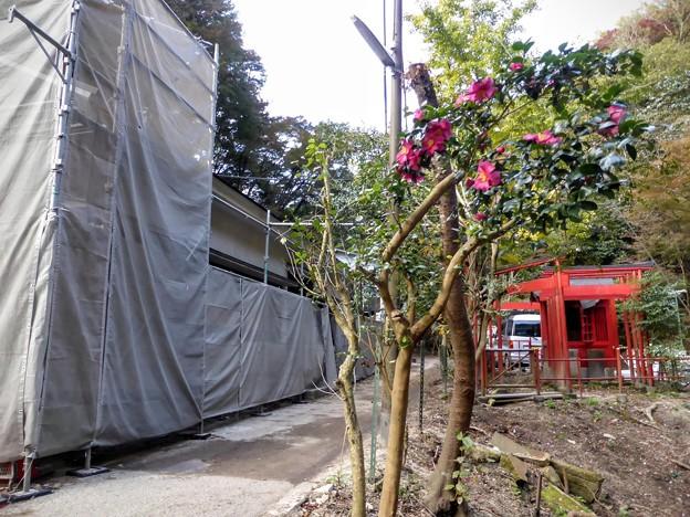 Photos: 稲荷茶屋再建中