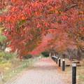湖畔の秋1