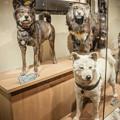 Photos: 日本犬たち