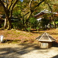 Photos: 秋の夜間特別拝観でライトアップされる