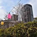大阪の春の風物詩