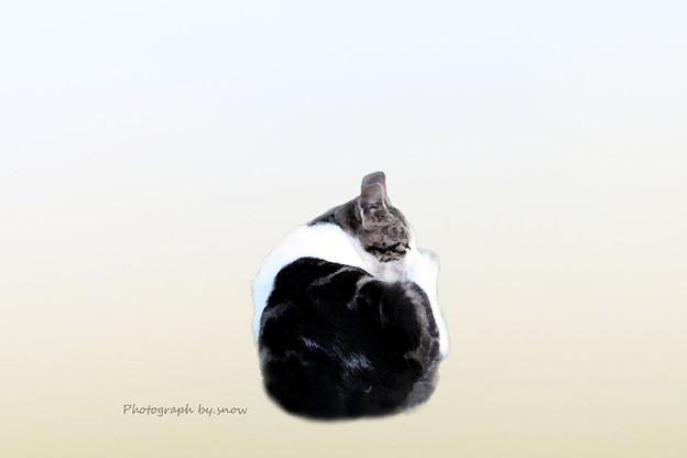 Photos: 班猫には程遠い