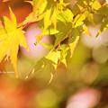 Photos: 小秋