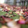 Photos: 秋の小路