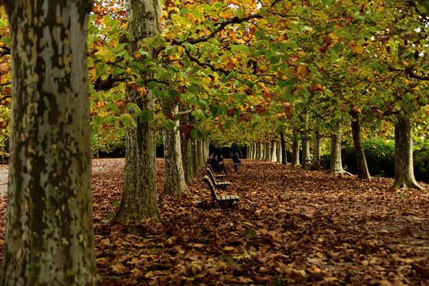 秋の風景(4