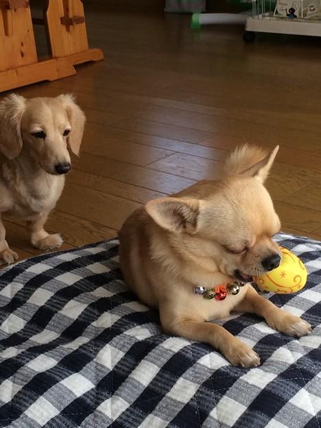 写真: 俺のボール・・・