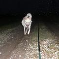 写真: 夜間走行はライト点灯しましよう